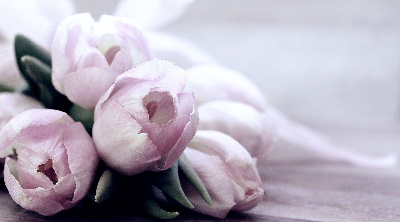 tulips-4072214_1280